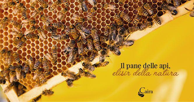 pane delle api