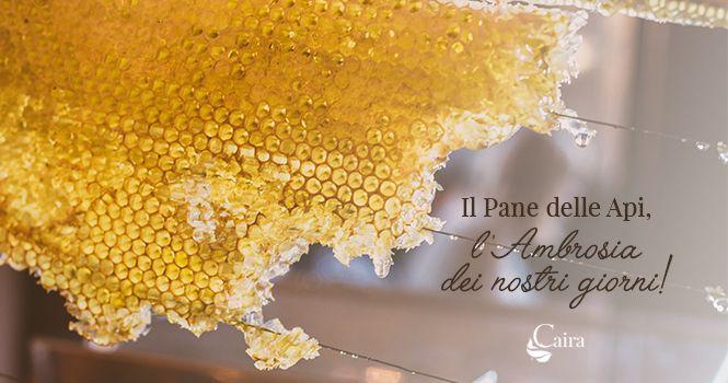pane delle api proprietà nutritive e curiosità