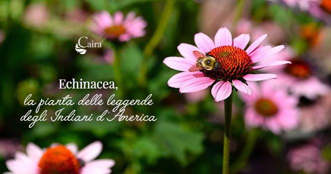 Echinacea proprietà, storia, miti e leggende nativi d'America