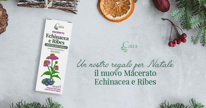 Macerato Echinacea e Ribes difese naturali e proprietà antinfiammatorie
