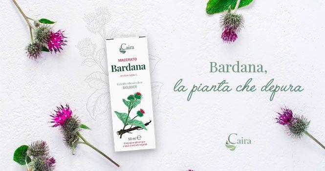 Bardana, la pianta depurativa della fitoterapia